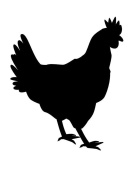 Pack of 3 Chicken Stencils Made from 4 Ply Mat Board 11x14, 8x10, 5x7