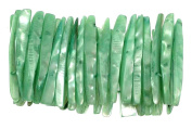Green Shell Bracelet Shell Jewellery Shell Jewellery Stretch Bracelets