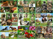 Postcrossing Set of Postcards with 100 Animals from Over the World Designs