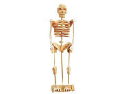 Zieast. New Wood Educational Assembly DIY Toy for 3D Wooden Model Puzzles of Human Skeleton¡