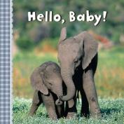 Hello, Baby! [Board Book]