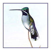 Long Billed Hummingbird Detail 1 by Gould Bird Counted Xs Stitch Pattern