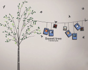 Dream Wall Wall Decal with Photo Frames, Tree Lines
