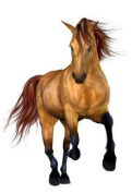 Wallmonkeys Beautiful Horse Peel and Stick Wall Decal, 90cm Height by 60cm Width