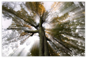 Picture Sensations Glow in The Dark Canvas Wall Art, Sun Tree Rays of Light