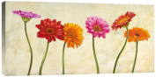 Global Gallery Cynthia Ann Gerberas Stretched Canvas Artwork