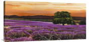 Global Gallery GCS-375394-1836-142 Valerio Sella Campo Di Lavanda Wall Art Gallery Wrap Giclee on Canvas Print