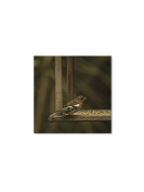 Abbott Collection Single Bird Wall Canvas