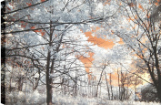 HobbitHoleCo Gallery Wrapped 90cm by 60cm Landscape Photography on Canvas, P.T. Turk, Trees