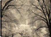 HobbitHoleCo Gallery Wrapped 90cm by 60cm Landscape Photography on Canvas, P.T. Turk, Building In Trees