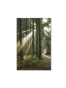 Abbott Collection Forest Floor Wall Canvas