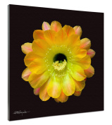 Somerset Fine Art Echinopsis Cactus Hybrid Daydream Photograph Print, 41cm by 41cm