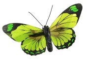 Touch of Nature 1-Piece Feather Butterfly Robin Egg on Clip for Arts and Crafts, 10cm , Chartreuse, Tangerine