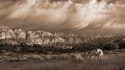 Somerset Fine Art RDA045PRUSN0916 On the Utah Plains Artwork