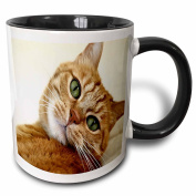 3dRose Print of Orange Tabby Cat Painting Two Tone Black Mug, 330ml, Black/White