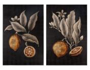 Citrus Study Hand Painted Art, S/2
