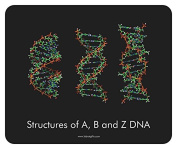 """Lab Rat Gifts MP026 Open Cell Rubber """"Structures of A, B, and Z DNA Black"""" Mouse Pad"""