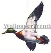 7.6cm Duck Hunting Ducks Hunter Mallard Hunt Waterfowl Removable Peel Self Stick Wall Decal Sticker Art Rustic Lodge Cabin Outdoor Wildlife Home Decor 8.9cm wide by 7.6cm tall