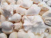0.9kg of Large White Beach Wedding Shell Mix (about 8 cups or 1.9l) Seashells Crafts Beach Cottage Decor