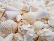 0.5kg (about 2 cups) of Medium Sized White Beach Wedding Shell Mix (about 8 cups or 1.9l) Seashells Crafts Beach Cottage Decor