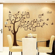 Rainbow Fox Large Black Photo Frames 8 Frames Included On The Tree Branches And Soaring Birds (180cm*250cm)Art Wall Stickers And Faimly-Lettering Decals For Living Room, For Kids Bedroom