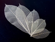 100 Assorted Size 5.1cm 7.6cm 10cm 15cm 18cm Skeleton Natural Ficus Religiosa Leaves Artificial Leaves Craft Card Scrapbook Diy Handmade Embellishment Decoration Art