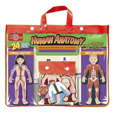 T.S. Shure Human Anatomy Wooden Magnetic Figures, Model: 9851, Toys & Play