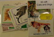60 Cats and Dogs (585)