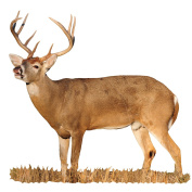 Mossy Oak Graphics ( 22044-C-M) 'Deer Whitetail Buck Lip Curling' Cut-Out Indoor Graphics