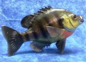 Taxidermy 30cm Fibreglass Sunfish Wall Mount