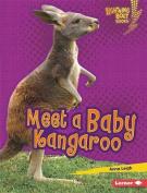 Meet a Baby Kangaroo