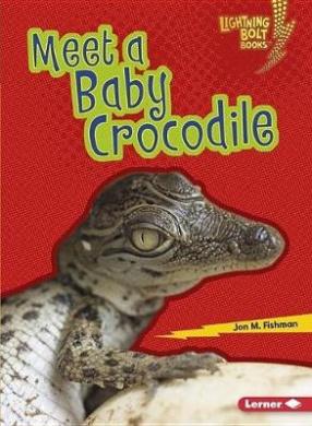 Meet a Baby Crocodile (Lightning Bolt Books Baby Australian Animals)