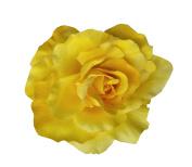 Handmade Beautiful Large Rose Hair Clip, Made in USA
