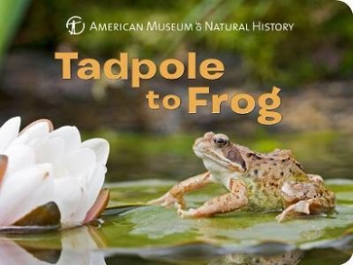 Tadpole to Frog (American Museum of Natural History) [Board book]