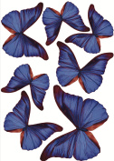 Plage 301514 3D Charming Butterfly Stickers Deep Blue Butterflies 7 Butterflies between 8 and 14 x 11 cm x 6.5 cm), Plastic, 14 x 100 x 11 cm