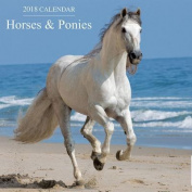 2018 Calendar: Horses & Ponies