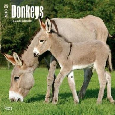 2018 Donkeys Wall Calendar