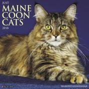 Just Maine Coon Cats 2018 Wall Calendar