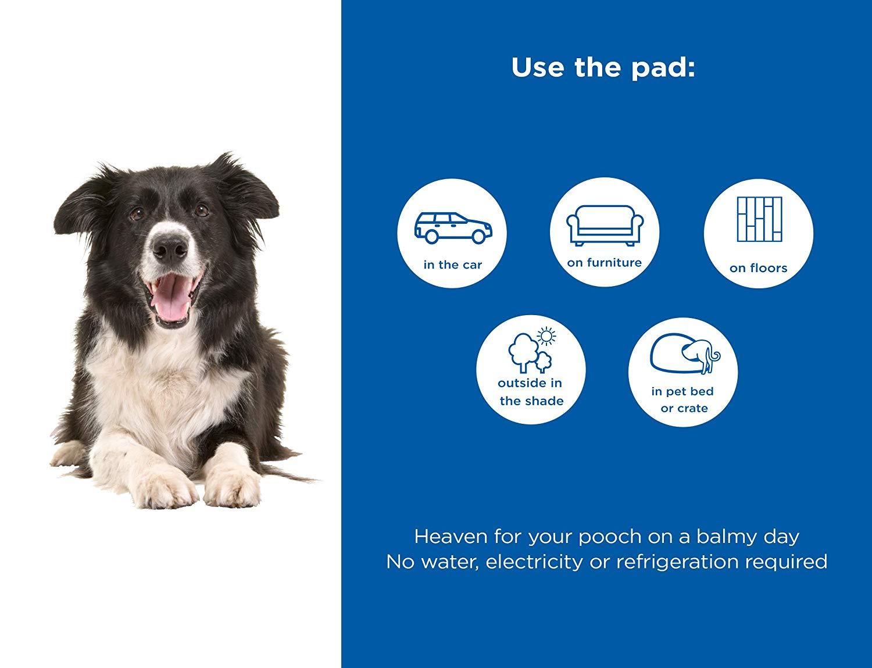 82e9237a459f Online Pet Store | Buy Pets, Dogs, Beds & Furniture, Bed Mats Online in  Australia - Fishpond.com.au