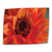 Art Wall 30cm by 46cm Fiery Dahlia by Kathy Yates Flat/Rolled Canvas with 5.1cm Accent Border