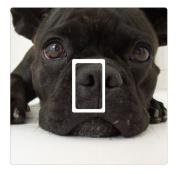 French Bulldog Novelty Vinyl Light Switch Cover Sticker