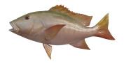 Snapper Fish Wall Mount Fish Replica, Fishing Wall & Coastal Decor