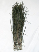 Strung Peacock Herl for Fly Tying or Tying Flies