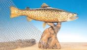 Taxidermy 33cm Fibreglass Brown Trout Fish Statue
