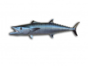 Kingfish Wall Mount Fish Replica, Fishing Wall & Coastal Decor