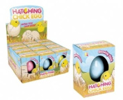 Hatching chick egg. One supplied.