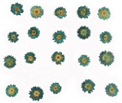 Pressed flowers, blue apricot blossom 20pcs for floral art, card making, jewellery making, scrapbooking