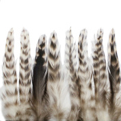 Rooster feathers, 50+ 10cm - 15cm natural grey chinchilla hackle feathers for crafting, decoration