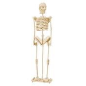 LUQUAN Child Assemble Human Skeleton Model 3D Wood Puzzle Toy Construction Kit