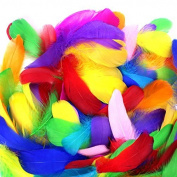 Coceca 500 Pcs Colourful Feathers for DIY Craft Wedding Home Party Decorations